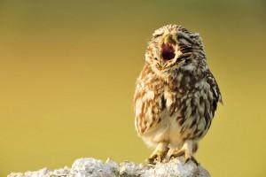 Khi động vật bỗng dưng muốn... ngáp