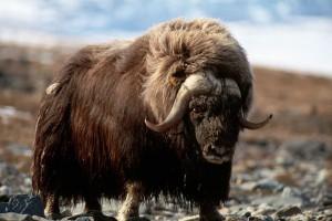 Top 10 loài động vật 'bốc mùi' nhất thế giới.