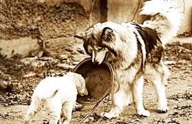 Trước lúc chết, giúp đỡ đồng loại, số phận chú chó đã thay đổi hoàn toàn